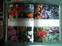 winter-flowering-vines